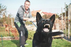 Read more about the article U.S.P.S. wants you to be aware of the seriousness of dog bites